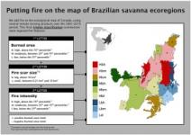 Artigo científico revela padrões de fogo até então desconhecidos no Cerrado nas últimas duas décadas