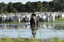 Pecuarista pantaneiro ganha guia de melhores práticas de sustentabilidade
