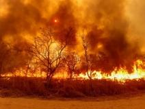 Pesquisa analisa comportamento do fogo no Cerrado nos últimos 20 anos