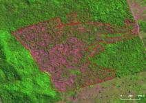 Imazon - Apenas em julho deste ano, a Amazônia perdeu uma área de floresta maior do que a da cidade de São Paulo