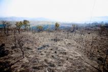 A queda de um balão provocou o incêndio que consumiu 80% do Parque Estadual Juquery, em São Paulo