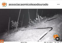 Primeiro registro de uso do viaduto vegetado pela fauna no município de Silva Jardim (RJ)