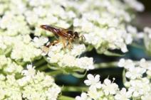 Vegetação nativa exerce efeito protetor contra poluentes em remanescentes florestais