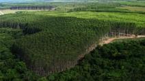 Suzano integra projeto que promete conservar, restaurar e cultivar 2,5 bilhões de árvores no mundo