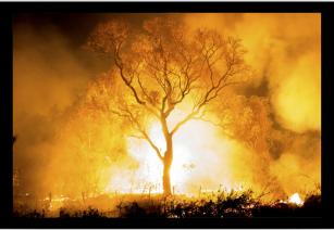 Exposição virtual de fotos mostra vida, morte e renascimento do Pantanal após as queimadas