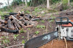 Desmatamento cai 18% na Amazônia Legal em um ano