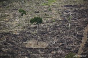 Dilma abre mão do combate ao desmatamento, diz Greenpeace
