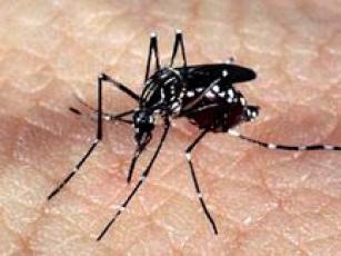 Vacina contra Zika pode ser desenvolvida em até um ano, diz ministro