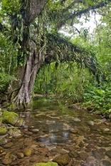 Edital de apoio da Fundação Grupo Boticário de Proteção à Natureza a projetos de conservação da natureza está aberto