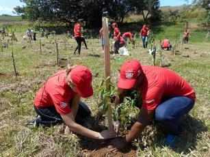 Voluntários da Coca-Cola FEMSA Brasil plantam 1.200 árvores para preservar Rio Capivari em Jundiaí