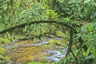 Projeto Conexão Mata Atlântica reforça importância de conservar floresta tropical