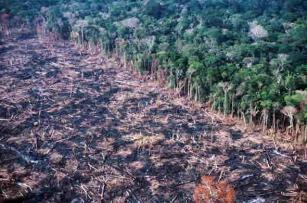 Amazônia Legal perde mais de 3 mil km2 de floresta no primeiro semestre de 2020
