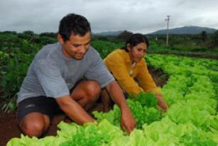 Por que deveríamos adotar uma dieta à base de vegetais?