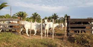 Agropecuária não é o suficiente para fazer o Brasil se desenvolver, aponta pesquisa