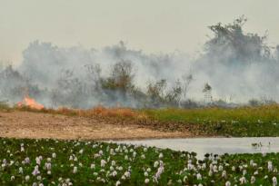 Para evitar catástrofes ocorridas em 2020, projeto de recuperação amplia ações com foco na prevenção de incêndios no Pantanal