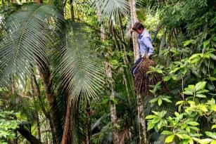 Extração sustentável e conservação da Mata Atlântica: Juçaí, empresa do Sistema B, aposta em cultivo responsável da Palmeira Juçara e ações de desenvolvimento social