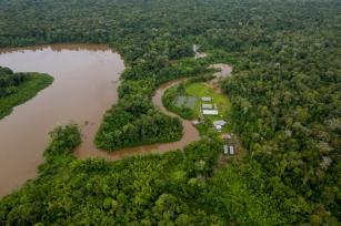 No Dia da Árvore, FSC® Brasil reforça a importância das florestas para a vida na terra