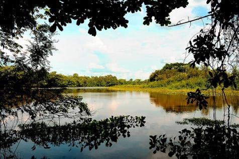 PLURALE EM REVISTA, Ed 58 - Especial Pantanal : a preservação transformando vidas