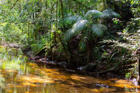 Legado das águas: maior reserva privada de Mata Atlântica do país passou a oferecer atividades para o público em geral