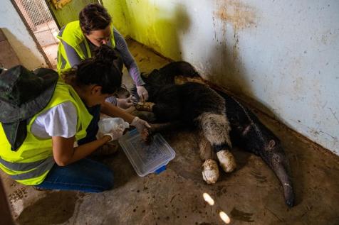Sesc Pantanal inicia pesquisa para avaliar impactos dos incêndios na fauna do bioma