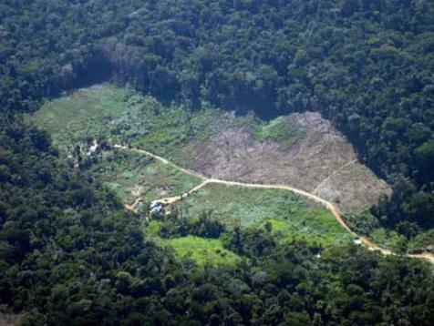 36 mil hectares desmatados em março, segundo DETER