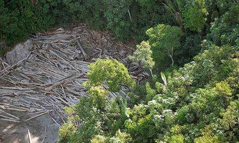 Desmatamento da Amazônia cresceu 17% no primeiro semestre